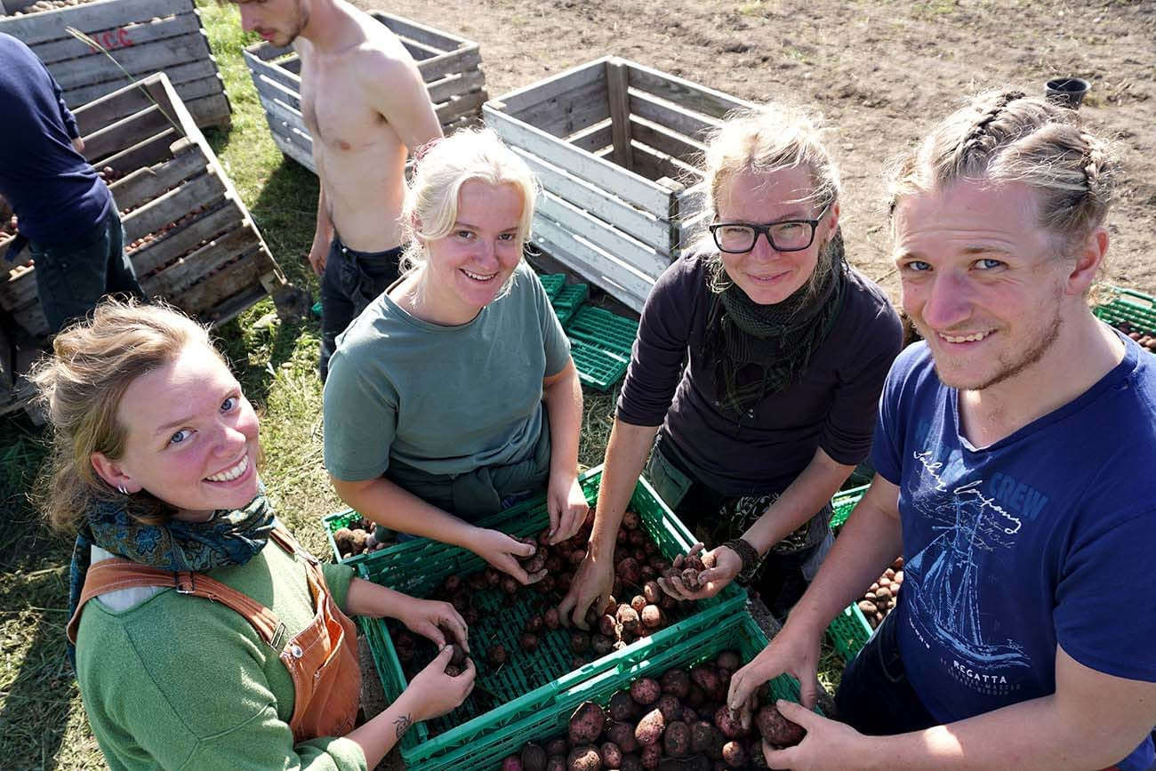 Group of students at Fosen Folk School sorting potatoes after harvest