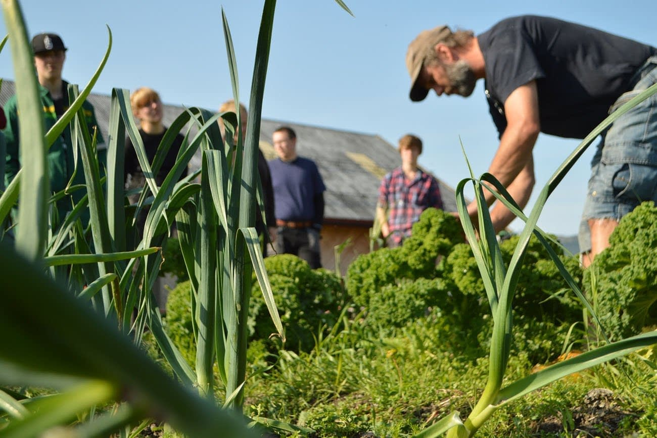 Teacher and students in Organic Farming at Fosen Folk school in a field of kale and leeks